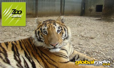 Zoo de Castellar, animal rescue, Costa Del Sol