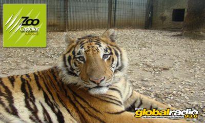 Zoo de Castellar, animal rescue, Costa Del Sol