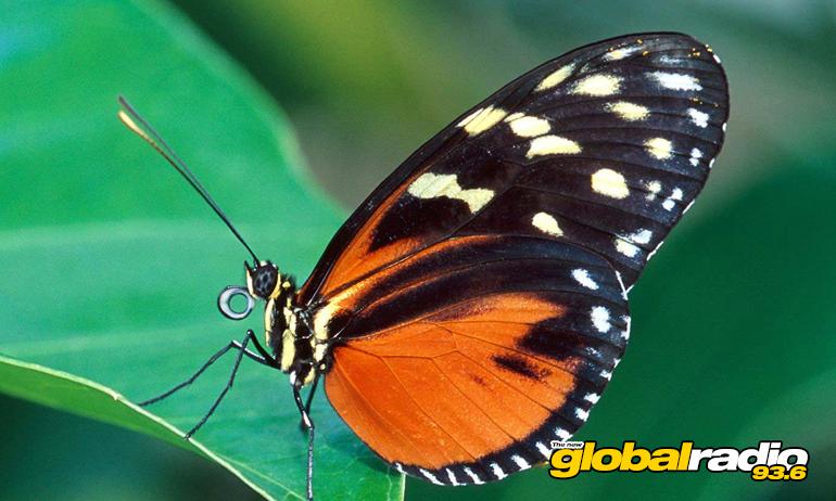 Butterfly Park Benalmádena