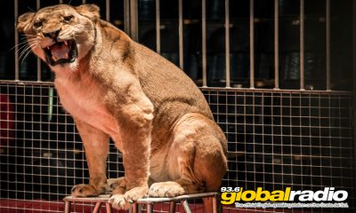 Malaga Animal Protection Laws Delayed