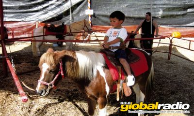 Ponies Banned From Alhaurin Fair