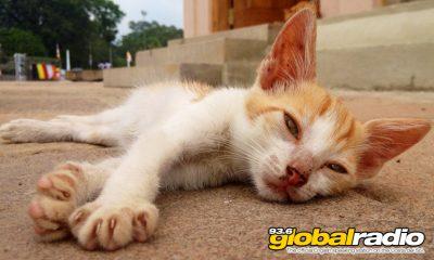 Cat Colonies In Torremolinos To Be Reduced