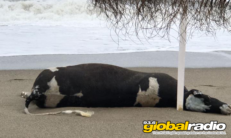 Cow Fuengirola Beach