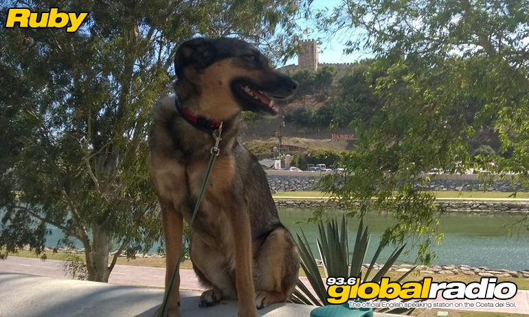 Fuengirola Dog Park Given Green Light