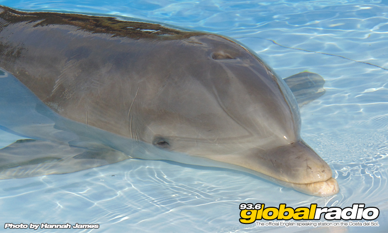 Baby Dolphin Rescued In Marbella