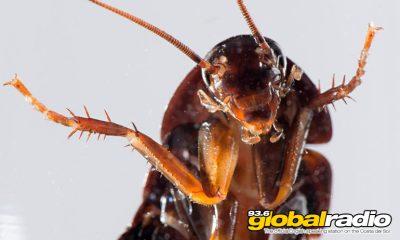 Costa Del Sol Cockroach Warning