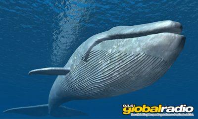 Blue Whale Dies Near Marbella
