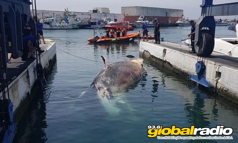 Blue whale marbella