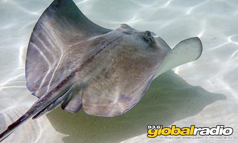 Costa Del Sol Stingray Warning