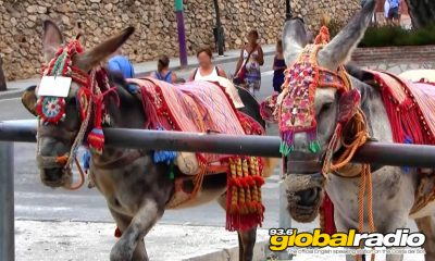 Plan To Protect Donkeys Rejected