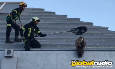 Bomberos Rescue Vulture