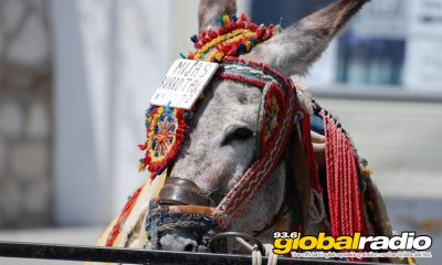 Weight Limits For Mijas Donkey Riders