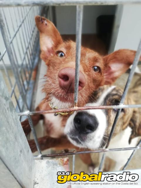 Dog Rescue Costa Del Sol
