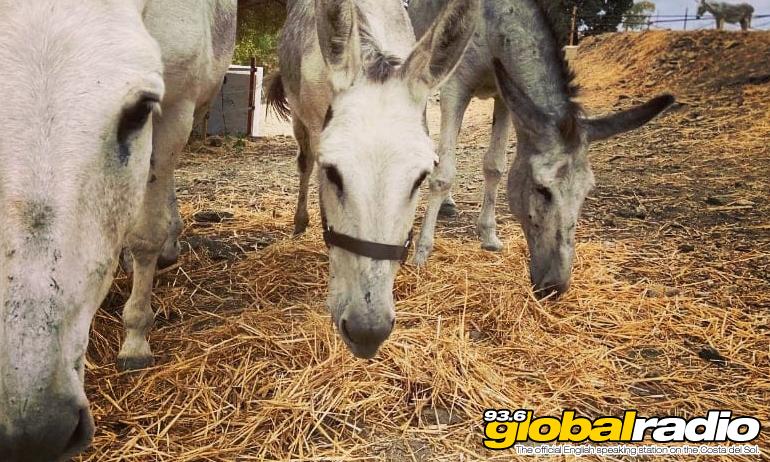 Donkey Dreamland Mijas