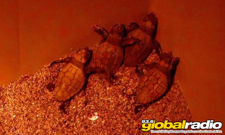 Rare Turtles Hatch On Costa Del Sol