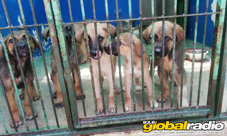 Rescue Dogs Facing Death