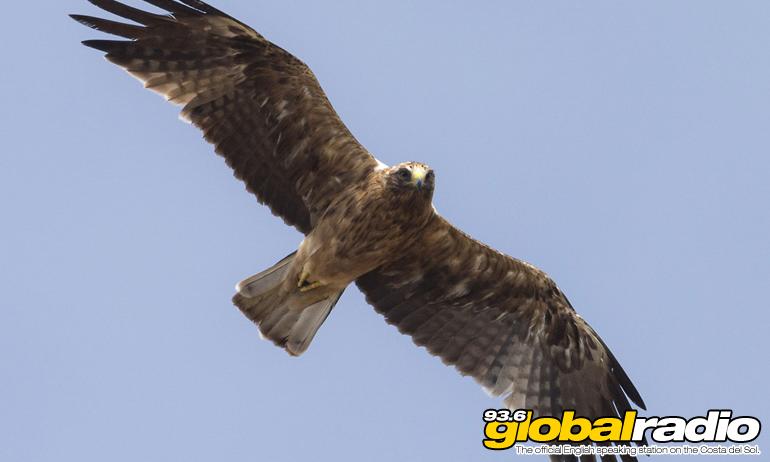 Benalmadena Birds Of Prey At Risk