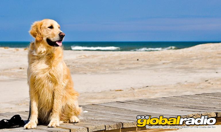 Benalmadena Council Plans New Dog Beach